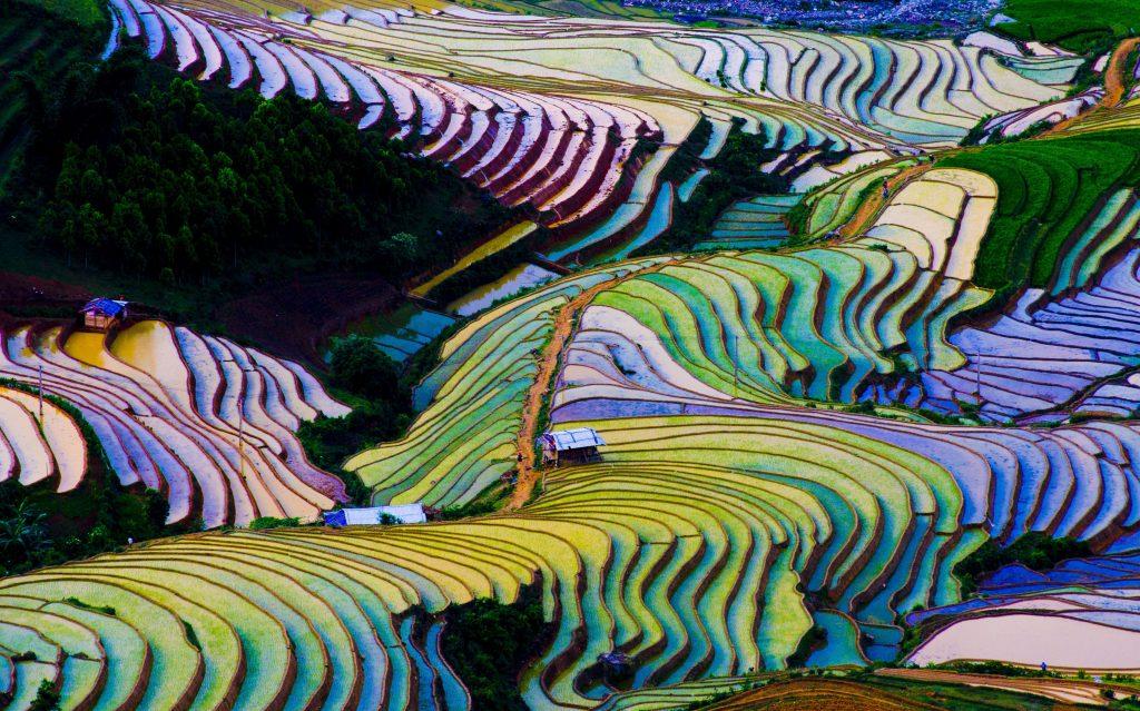 Typisch Asien: Reisfelder in Vietnam