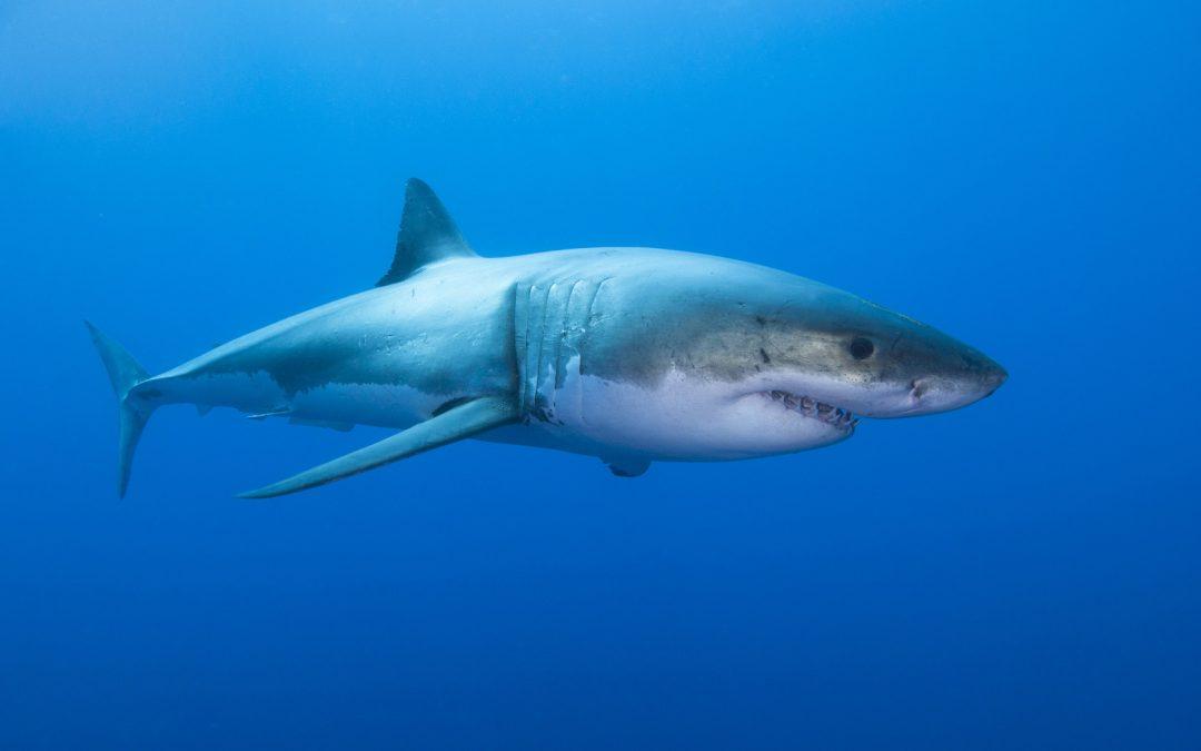Hai-Alarm auf Mallorca: Kein Grund zur Panik!